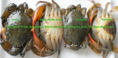 Aung Moe Khine Manufacturing Co. Soft Crab, Soft Shell Crab, Shells, Beef, Food, Juice, Conch Shells, Meat, Seashells