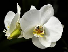 Orchid_11   Flickr - Photo Sharing!