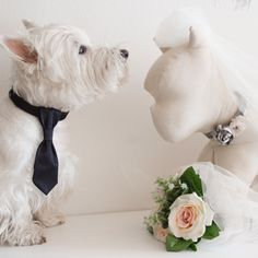 6 rules to bring your dog to the wedding 👰:  1. Ask to priest and location if you can bring the dog 2. Elegant but without exaggerating 3. Fresh water always available 4. No food from the buffet 5. No pee on objects or walls of location 6. No other dogs