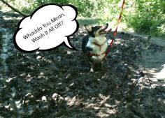 Corgi comics, corgi in the mud - Corgilicious.com