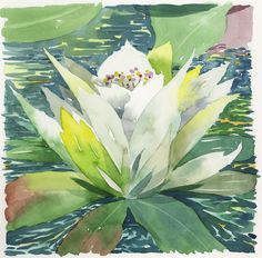 Jake Marshall watercolor. A water lily in the summer sun.