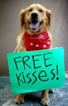 Free Kisses %u2665 {Puppy Love} {Pet Photography Ideas} {Golden Retriever Dog} { Prop Ideas } {Valentines Day Photo Session Idea}