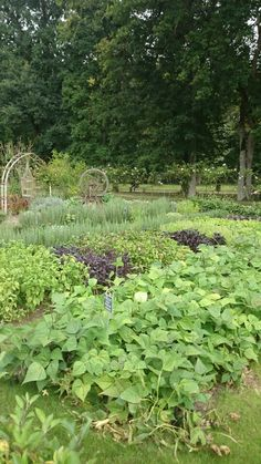 Chateau Chenonceau vegetable garden