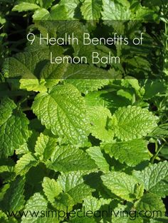 9 Health Benefits of Lemon Balm from www.simplecleanliving.com