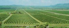 Mazoe known for Oranges. Zimbabwe