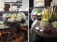 DIY Tabletop Terrariums  Succulent Terrarium How-To