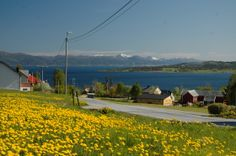 The village Fiksdal and the Tomrefjorden. Far behind is the town Molde, and you can see more in bestnorwegian.com