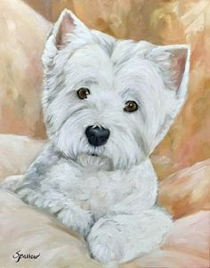 Wednesdays are for Westies! Dog Photos, Dog Pictures, Animal Pictures, Westie Puppies, Westies, Animals And Pets, Cute Animals, Disney Background, West Highland Terrier