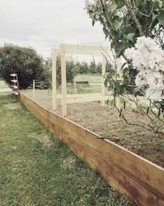 Last year was my first year tackling a vegetable garden onmy own . I went with square foot gardening to maximize the amount of seeds I…. Wood Trellis, Canada Ontario, My First Year, Square Foot Gardening, Vegetable Garden, Square Feet, My Photos, Seeds, Sidewalk