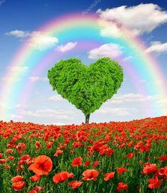 Rainbow above the poppy field Stock Photo , Tree Wallpaper Backgrounds, Beach Phone Wallpaper, Lit Wallpaper, Heart Wallpaper, Beautiful Landscape Wallpaper, Beautiful Flowers Wallpapers, Pretty Wallpapers, Beautiful Landscapes, Beautiful Images