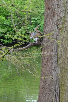 Squirrel in the tree by GorgeousPhotos on Etsy, $5.00