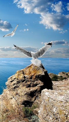 """Seagull-On-The-Rocks.""  &   The Black Sea."
