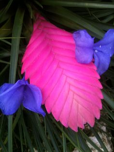 Amazing tropical plant, love the pink and purple shades, great makeup or nails inspiration.