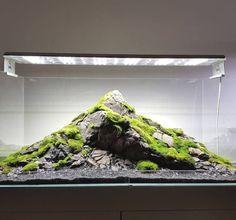 Aquarium Terrarium, Fish Tank Terrarium, Moss Terrarium, Garden Terrarium, Aquarium Landscape, Nature Aquarium, Home Aquarium, Aquarium Design, Aquarium Fish Tank