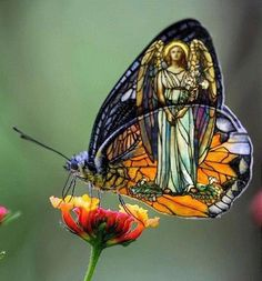 stained glass angel inside butterfly wings ( via facebook)