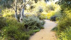 Monbulk Garden  natives with contrasting foliage and free form