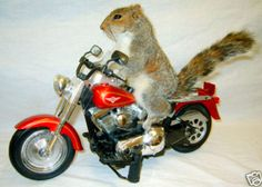 An animal (squirrel) on a motorcycle