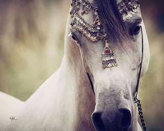 Arabian!