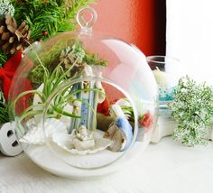 "Nativity Terrarium - Large 7"" Round Glass Globe Terrarium Kit with 2 Air Plants - Mary Joseph and Jesus - Driftwood - Moss - Christmas"