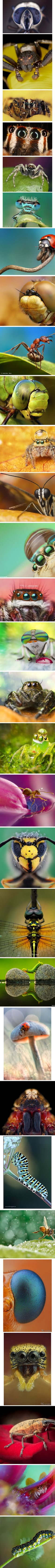 Macro Photography from 500px.com