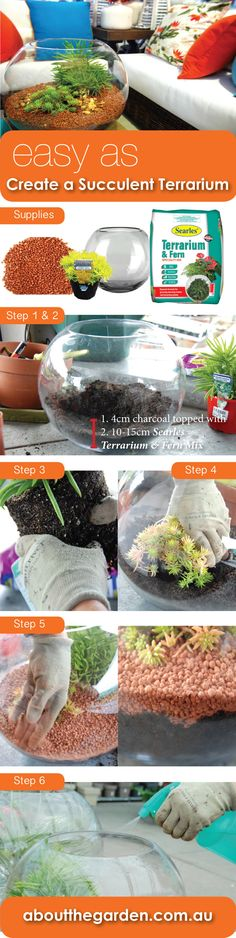 easy as! create a succulent terrarium STEPS to potting up with searles peat 80…