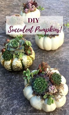 Succulent pumpkins are a fun and easy way to combine fall festivities with succulents! This step-by-step tutorial shows you how to use living succulents and real pumpkins to create a charming gift, place setting or decoration for Thanksgiving that will last until Easter! Easy to make and easy to care for. Then plant the succulent in pots or the garden when the pumpkin is spent  #DIYSucculents #succulentpumpkins #succulentpumpkinsdiy #succulentpumpkincenterpiece Succulents Diy, Planting Succulents, Pumpkin Centerpieces, Easy, Plants, How To Make, Plant, Planting, Planets