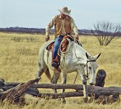 Cowboy Pictures, Horse Pictures, Cowboy Images, Horses And Dogs, Animals And Pets, Cute Animals, Cowgirl And Horse, Cowboy Art, Draft Mule