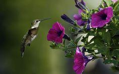 Algunas de las mejores plantas para atraer colibríes al jardín pinned with Pinvolve - pinvolve.co
