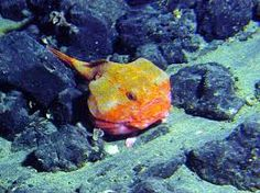 peixes do mar - Pesquisa Google