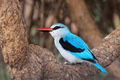 Lovely Kingfisher - Dinokeng Big 5 Game Reserve South African Holidays, Free State, Kwazulu Natal, Big 5, Holiday Accommodation, Game Reserve, Kingfisher, North West, Owl