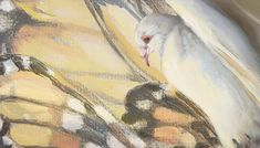 Any image featuring a bird or butterfly is now on sale. Limited Editions starting at $65.