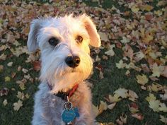 Schnoodle! lsquared