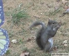 Very Hungry Squirrel | Gif Finder – Find and Share funny animated gifs