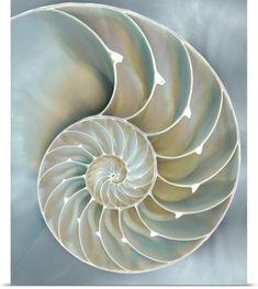 Caroline Kelly Poster Print Wall Art Print entitled Nautilus in Blue II, None