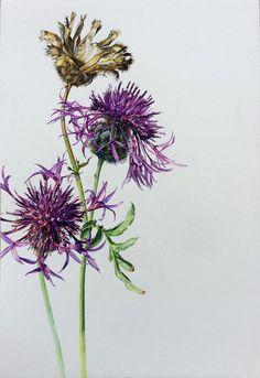 Wildflowers | Rosie Sanders