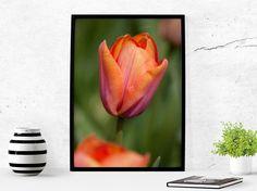 Digital art download- Orange pink Tulip Keukenhof The Netherlands- Photography download- printable art download- Wall art photography- color