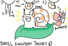 Image result for snail evolution
