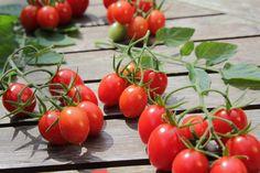 Tomaten auf einem Tisch