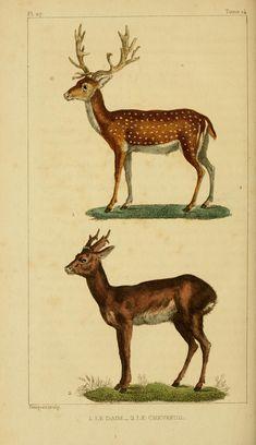 vintage engravings of reindeer and santas - Google Search