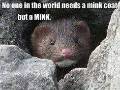 """VEGAN shared Very Vegan's photo. """"No one needs a Mink coat except a Mink"""" wedigfood.com will donate $1 every time you write a restaurant review to Root Capital, a nonprofit agricultural lender that grows rural prosperity in poor, environmentally vulnerable places.  #vegan"""