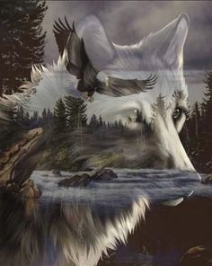 Wolf totem represents loyalty, intuition, and is known as The Teacher. Native American Wolf, Native American Paintings, Native American Pictures, Wolf Images, Wolf Photos, Eagle Pictures, Wolf Pictures, Tier Wolf, Wolf Artwork