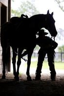cowboys and horses