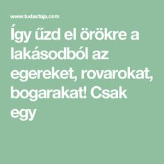 Így űzd el örökre a lakásodból az egereket, rovarokat, bogarakat! Csak egy Helpful Hints, Diy And Crafts, Cooking Recipes, Home And Garden, Cleaning, Tips, Quilling, Animals, Pom Poms