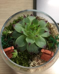 #succulent is the new sexy! Look at this beauty!  #terrariumart #terrariumlove #terrariumdesign #nofilterneeded #terrariumlover #succulents #simpledesigns #simpleideas #simple #officedesign #officeterrarium #oldhouse #cute #simpleoffice #creativeblumen #creativeandsimpledesign #teraryum #teraryumtasarım #teraryumbutik #teraryum_tr #teraryumaşkı #teraryumhediye #teraryumdizayn #teraryumgarden #teraryumlove