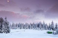 Majestic winter landscape with snowy fir trees. Fir Tree, Winter Landscape, Trees, Snow, Outdoor, Outdoors, Winter Scenery, Tree Structure, Outdoor Games