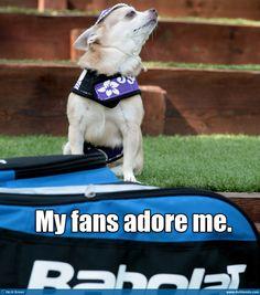Funny tennis dog!