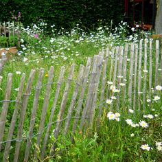 margriet-schapenraster-wilde-ecologische-bloementuin-tuin-breda.jpg