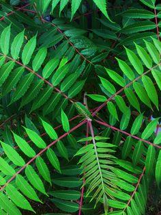 Plant Leaves, Plants, Pictures, Photos, Plant, Grimm, Planets