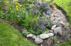Create a Beneficial Rain Garden: A Mini Wetland Habitat for Birds. step-by-step instructions on how to make a rain garden Rain Garden Design, Patio Design, Garden Compost, Parking Design, Garden Pictures, Zen, Pool Landscaping, Better Homes And Gardens, Native Plants