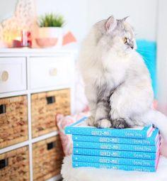 MITAINE!!!!!!!!!! et les livres d'Emma Verde. Emma Verde, Son Chat, Cute Cats, Have Fun, Adoption, Cute Animals, Lol, Photo And Video, Cool Stuff